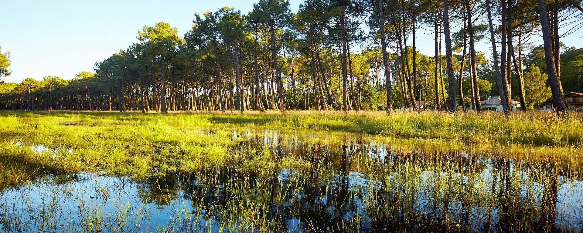 Piste Cyclable Dans Les Landes Une Semaine De Velo Du Bassin D Arcachon A Bayonne